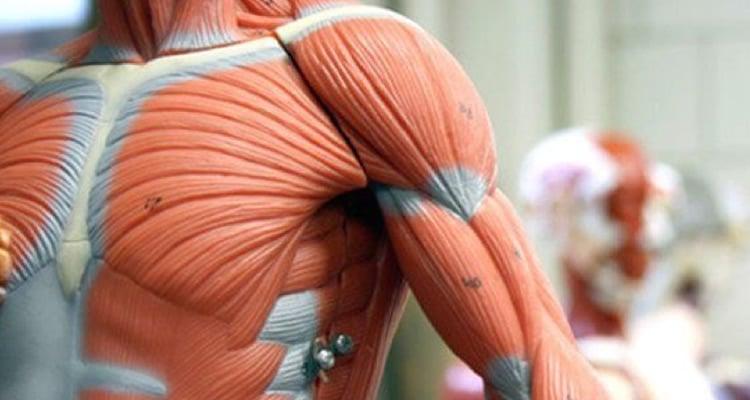 anatomia - instituto medina